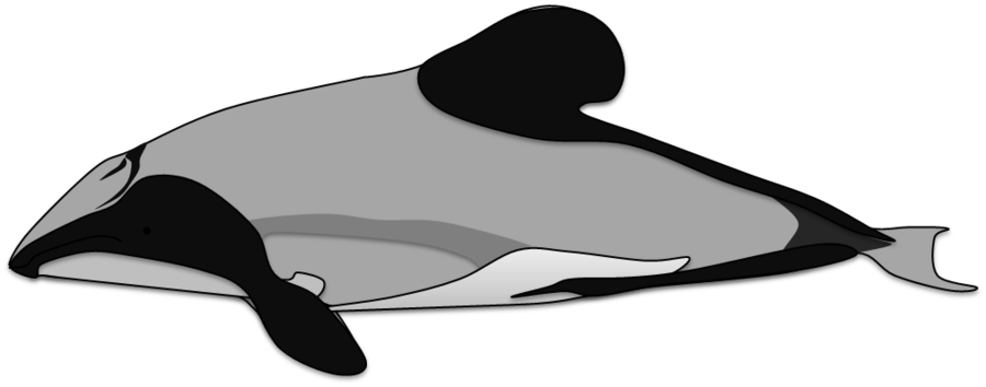 Clipart dolphin maui dolphin.  collection of hector