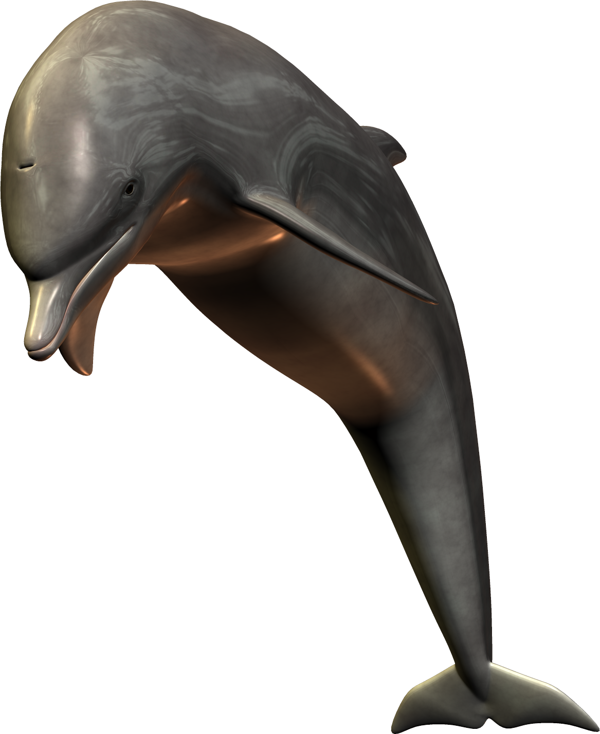 Clipart dolphin maui dolphin. Png image