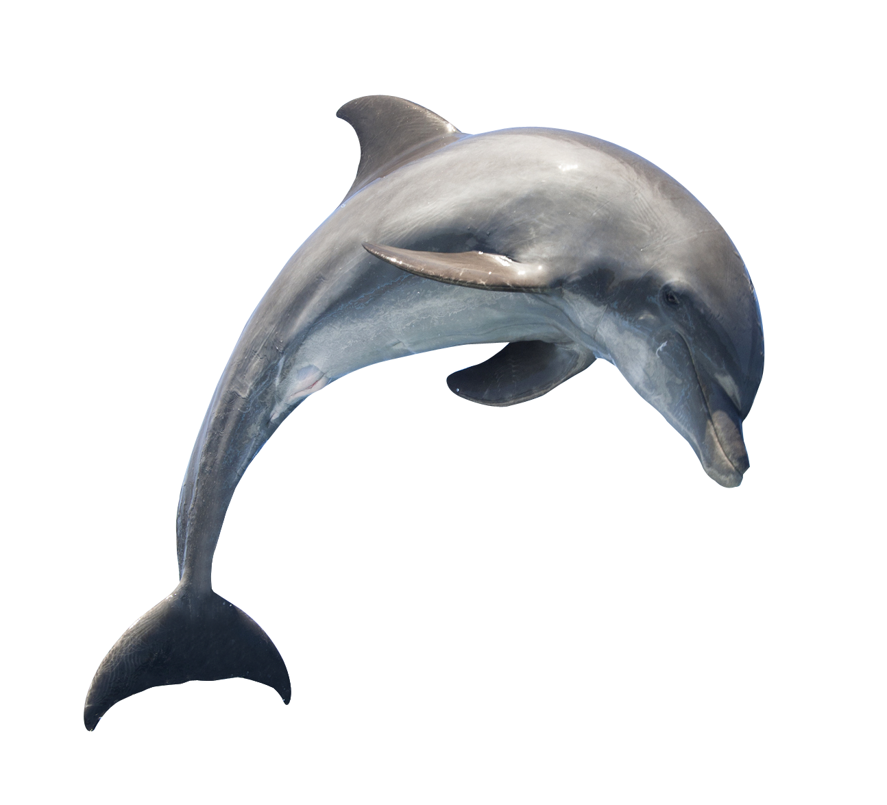 Dolphin clipart group dolphin. Png transparent free images