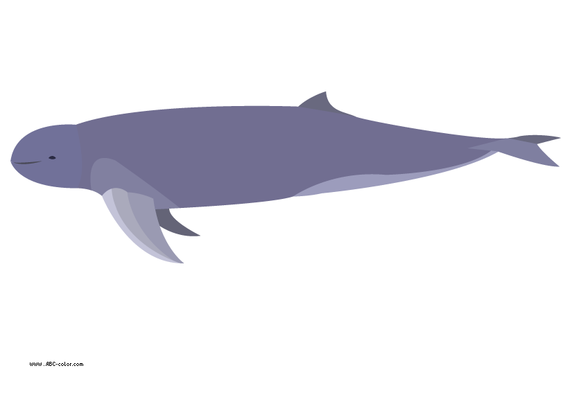 Picture irrawaddy download bitmap. Dolphin clipart dolphin love