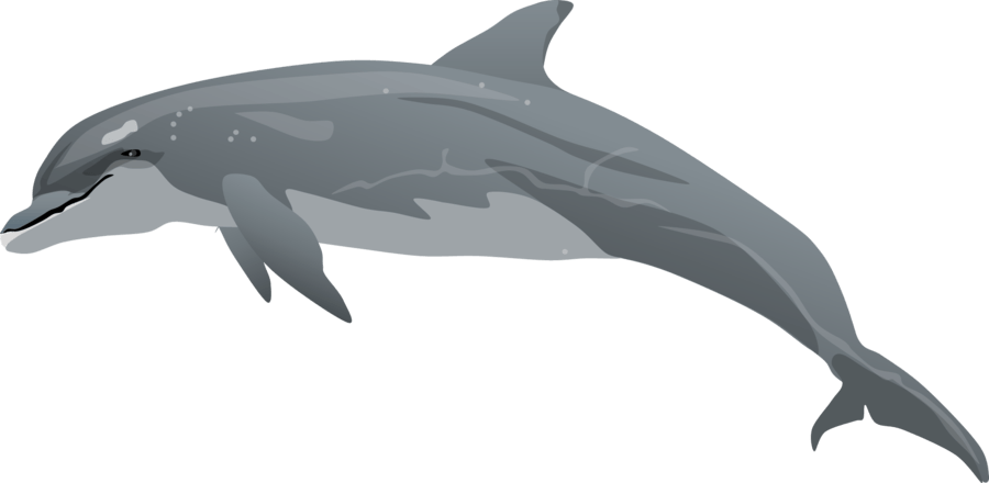 Real cliparts zone . Dolphins clipart bottlenose dolphin