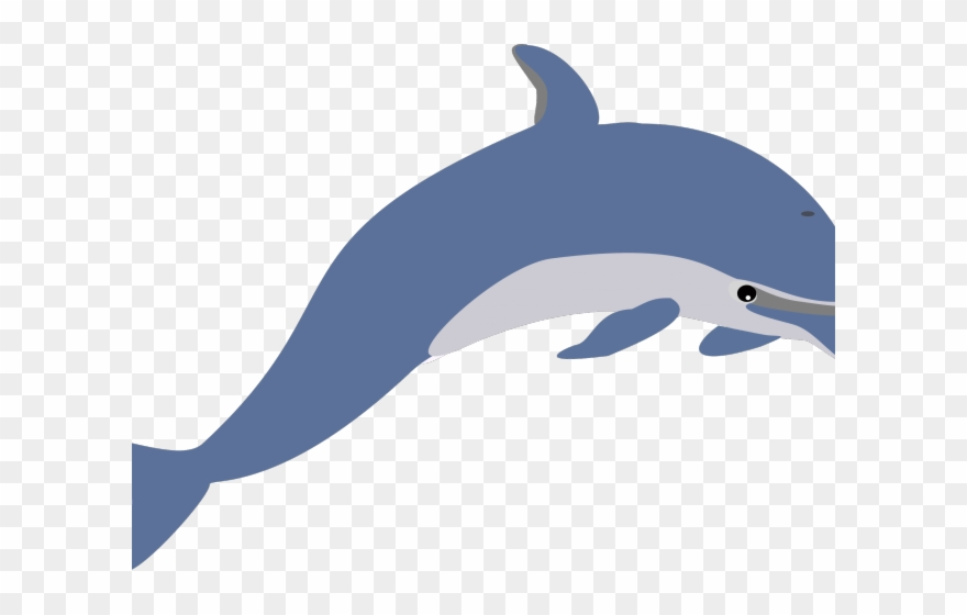 Clipart dolphin realistic. Clip art png download