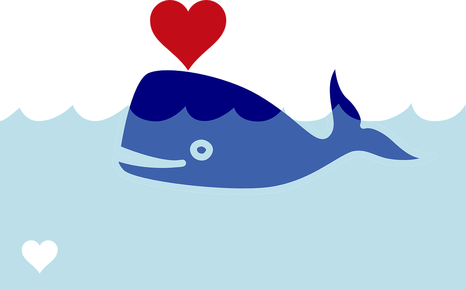 Blue whale free on. Clipart dolphin realistic