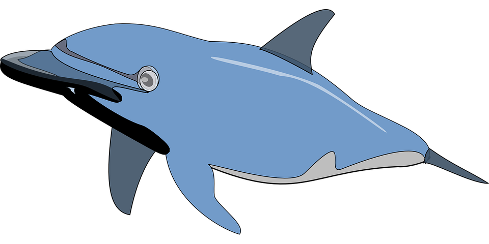 Dolphin clipart easy. Swimming cliparts shop of