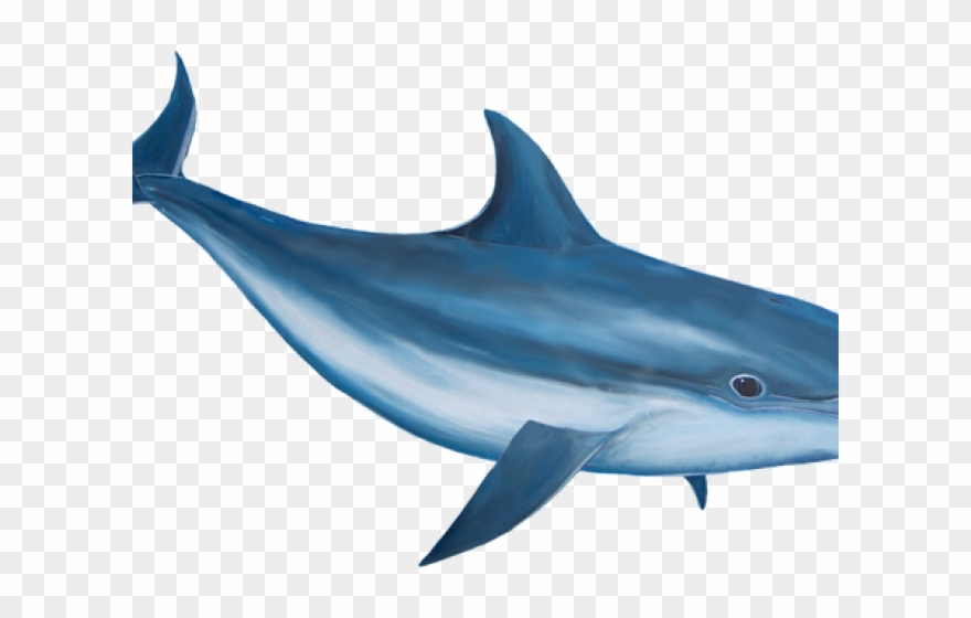 Dolphin clipart realistic. Bottlenose png