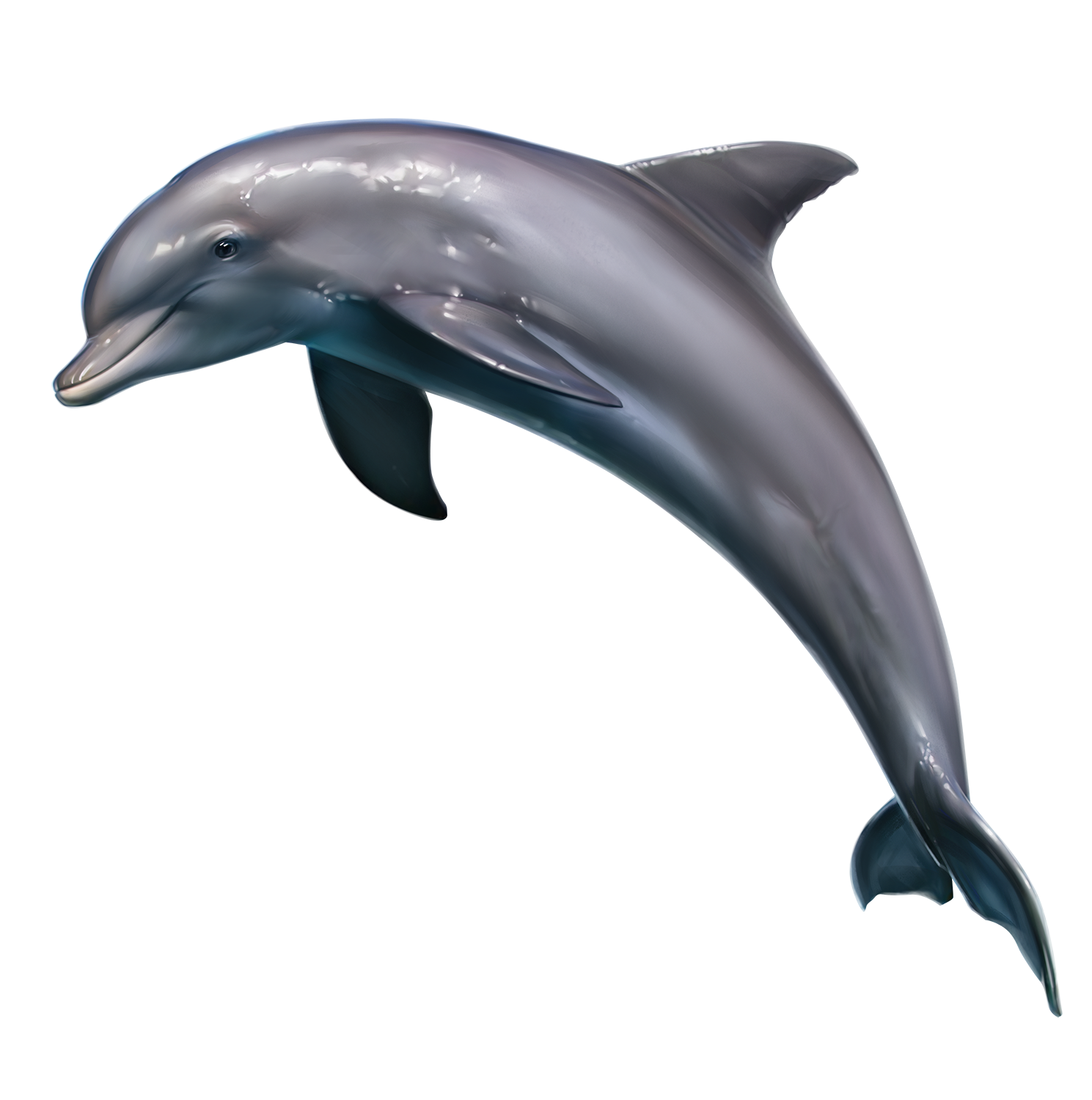 Clipart dolphin realistic. Pin by quibbles chelle