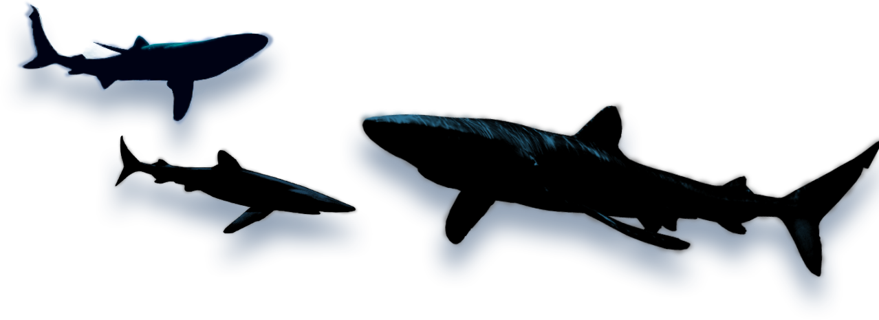 Trout clipart shadow. Shark images google search