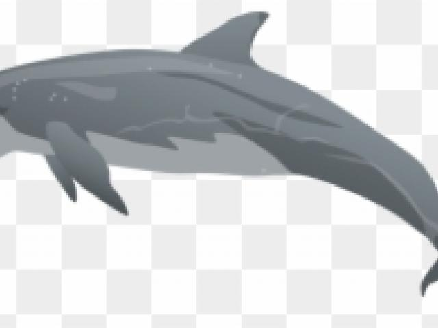 clipart dolphin side view