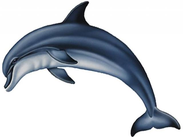 Dolphins clipart side view. Free dolphin baiji download