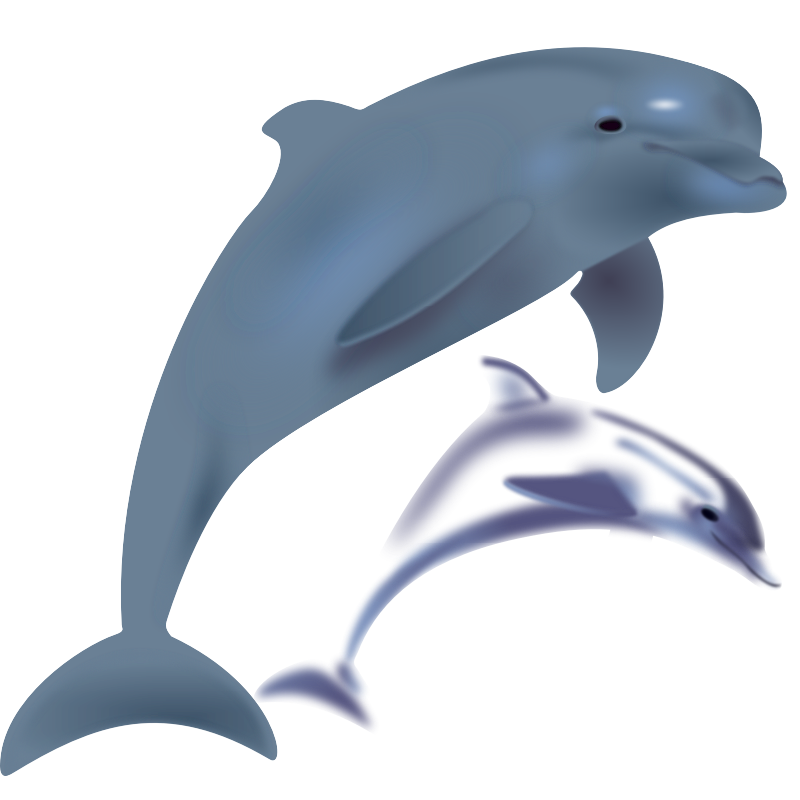 Clipart dolphin standing. Dolphins cliparts co delfinai