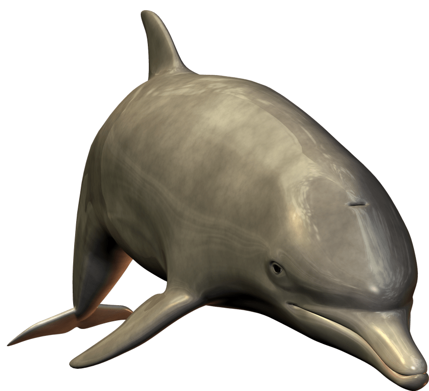 Clipart dolphin standing. Cute swimming png free