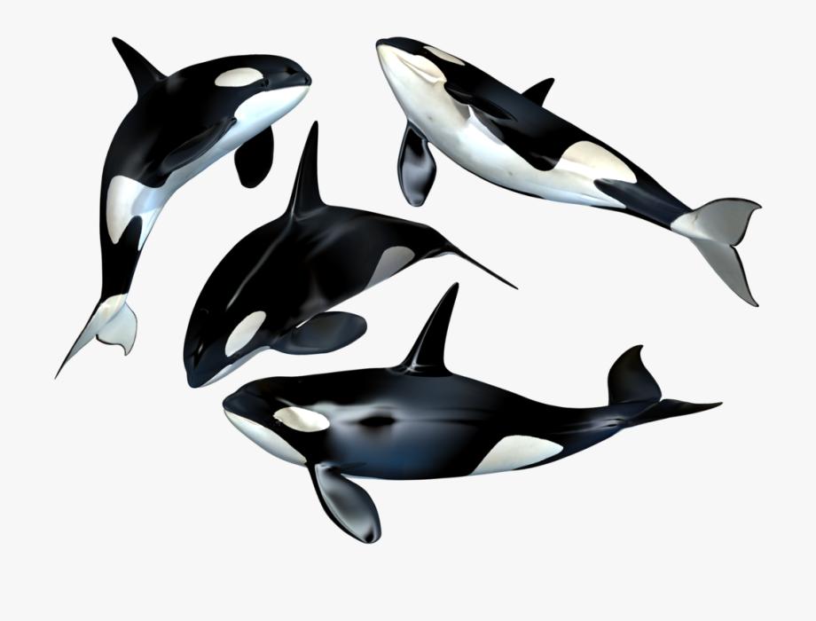 Dolphin clipart superhero. Killer whale png