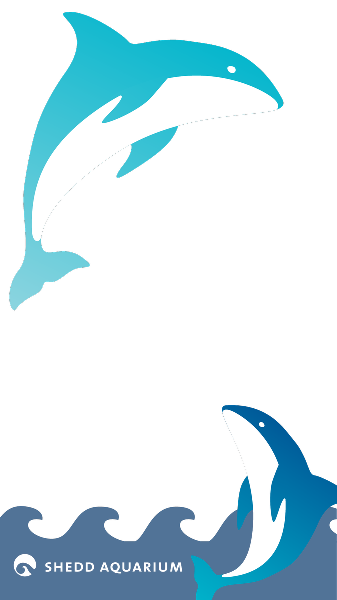 Dolphin clipart two. Shedd aquarium on twitter