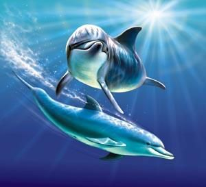 At daybreak and creatures. Dolphins clipart underwater