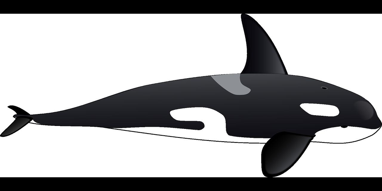 Clipart whale whale dolphin. Killer clip art black