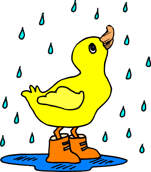 Duck in the rain. Ducks clipart swimming