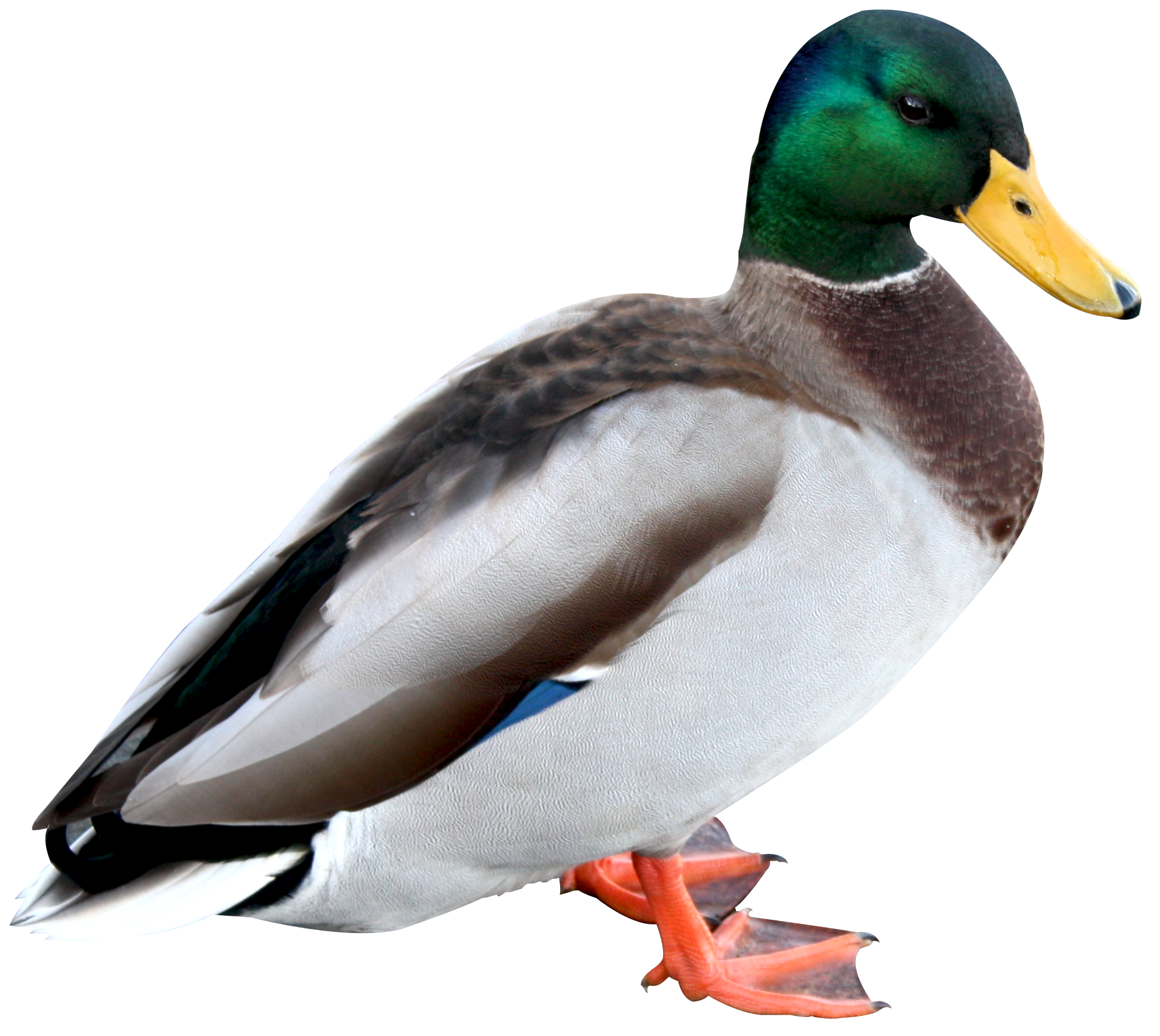 Hq png transparent images. Ducks clipart peking duck