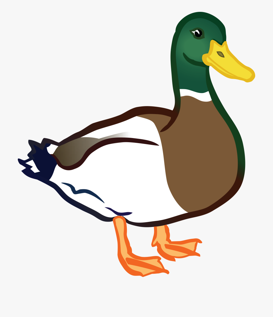 Ducks clipart duck walk. Free on dumielauxepices png