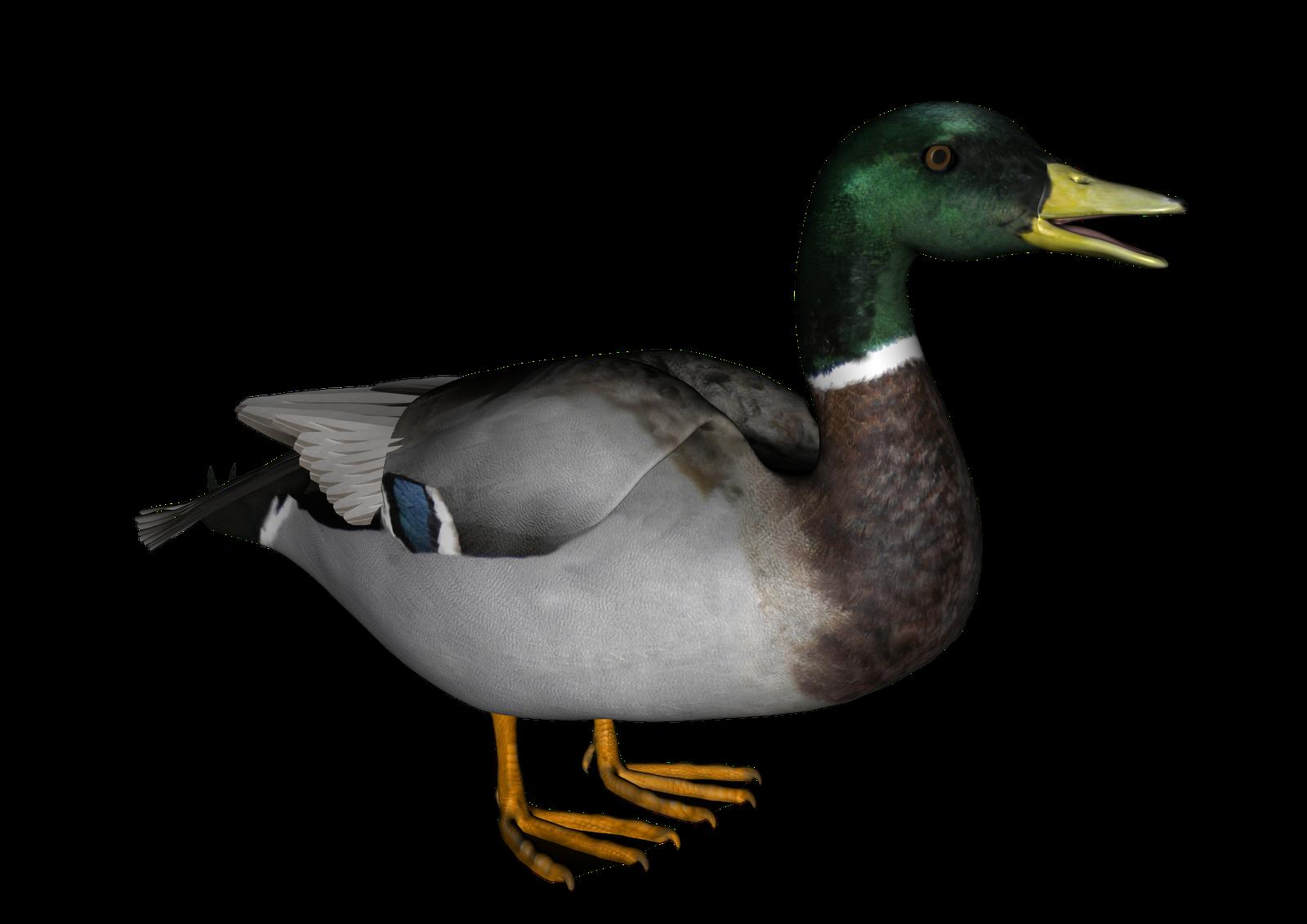 Transparent background frames illustrations. Clipart duck dack