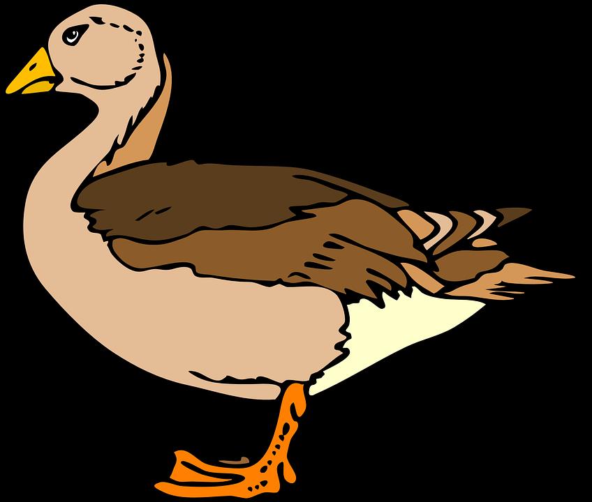 Goose clipart marsh. Duck bird frames illustrations