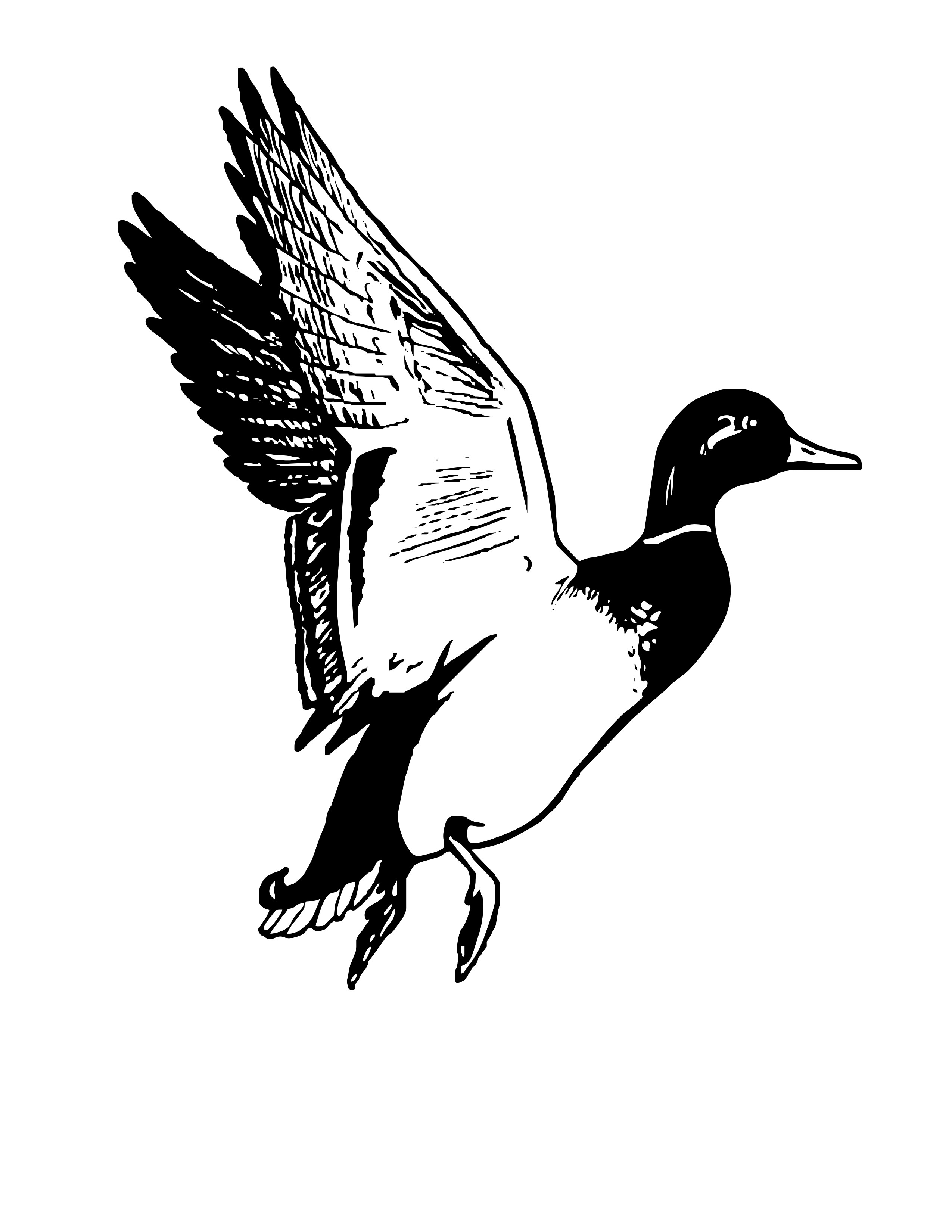 Duck free download clip. Hunting clipart waterfowl hunting