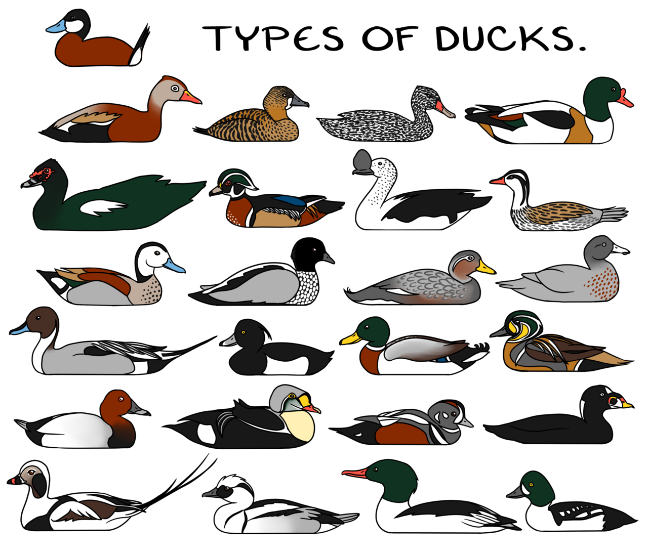 Types of by twapa. Ducks clipart group duck