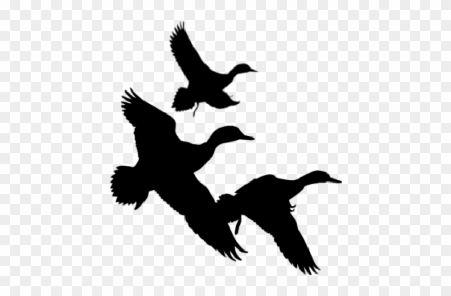 Clipart duck flying. Png free library silhouette