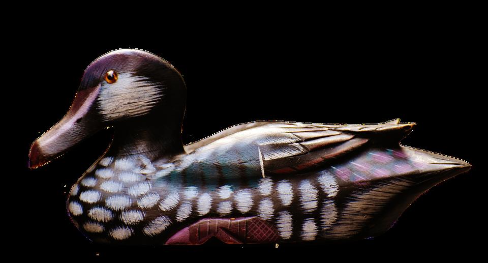 Duck mallard duck
