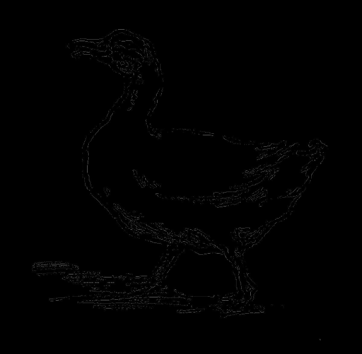 Farm clipart duck. Digital stamp design free