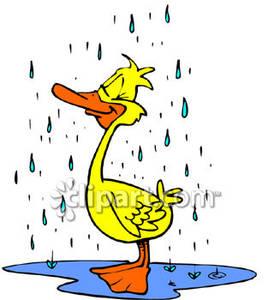 Silly duck in the. Ducks clipart rain