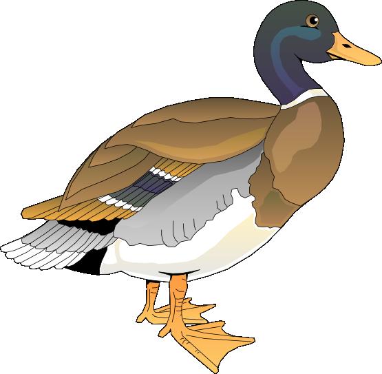 Ducks clipart public domain. Free duck clip art