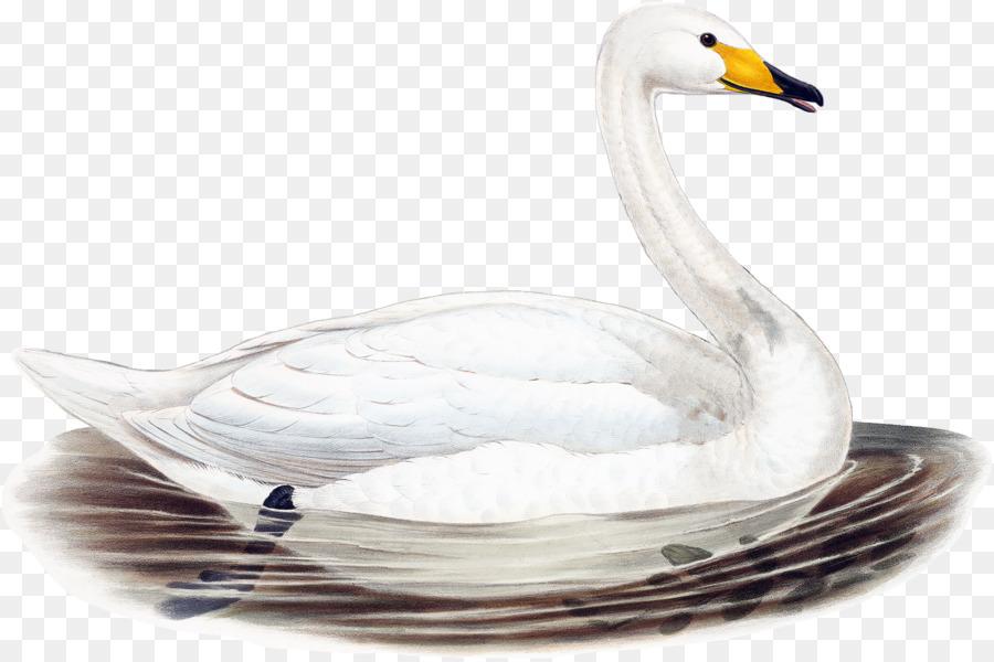 Water cartoon bird feather. Clipart duck swan