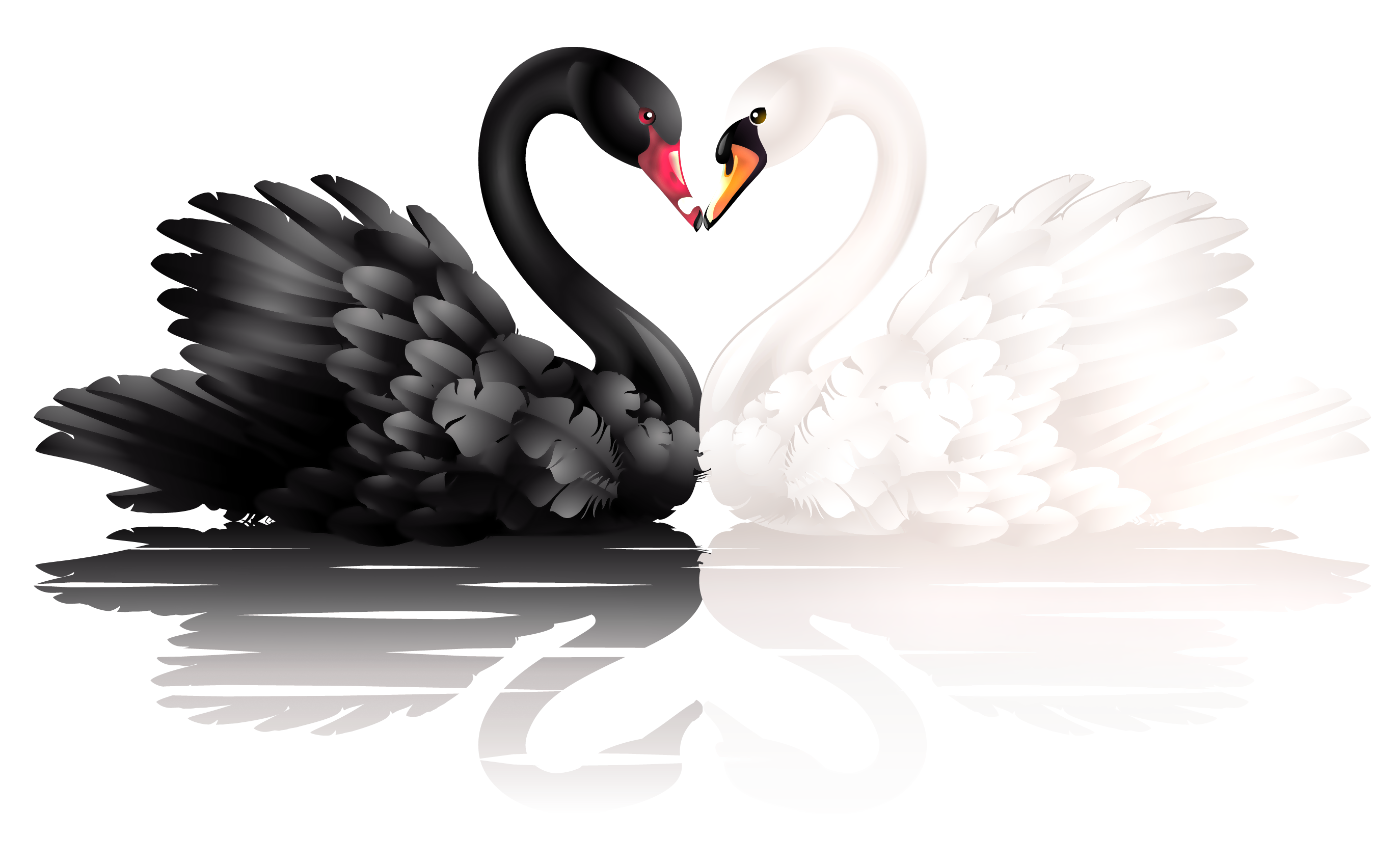 White and black swans. Hearts clipart swan