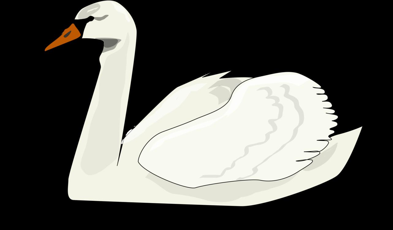 Clipart duck swan. Line art water bird
