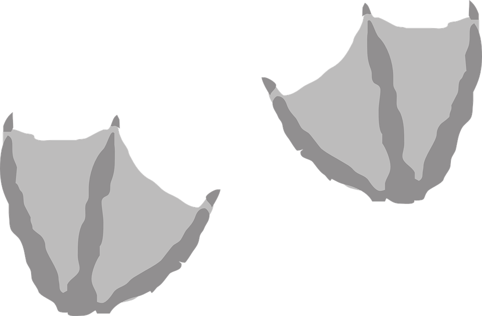 Feet clipart foot step. Png duck transparent images