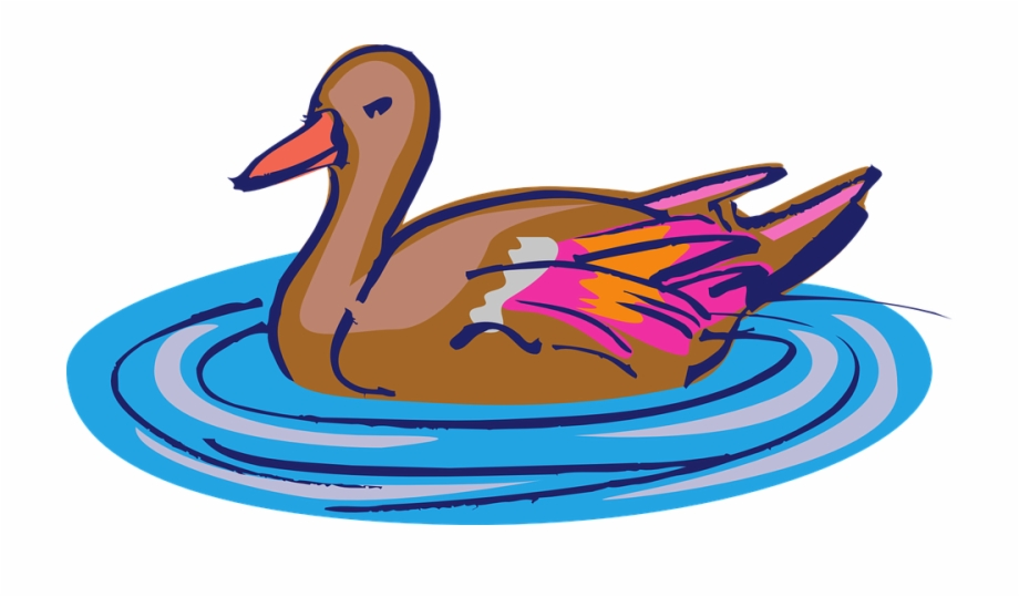 Water bird clip art. Ducks clipart swimming