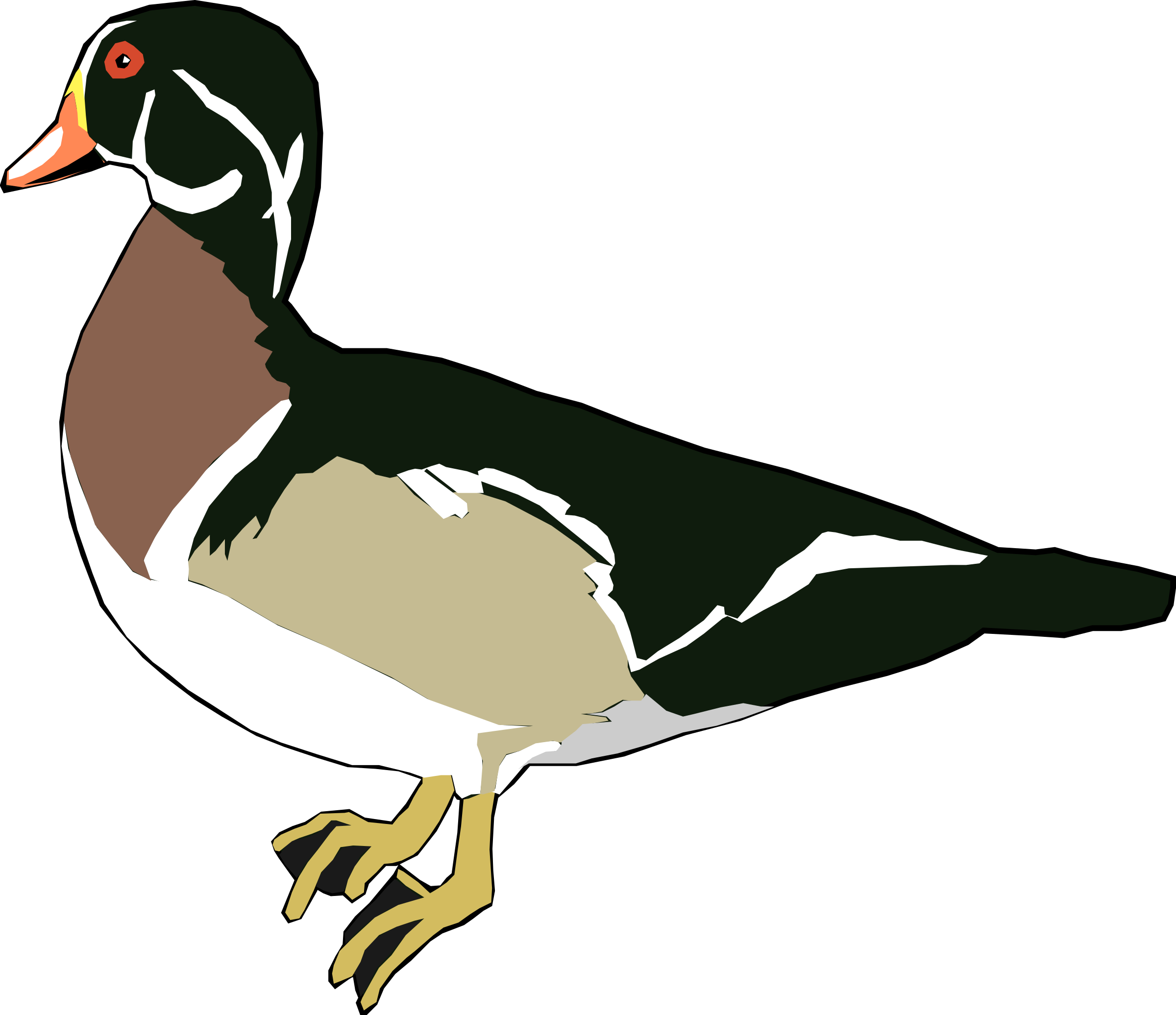 Clipart duck water.