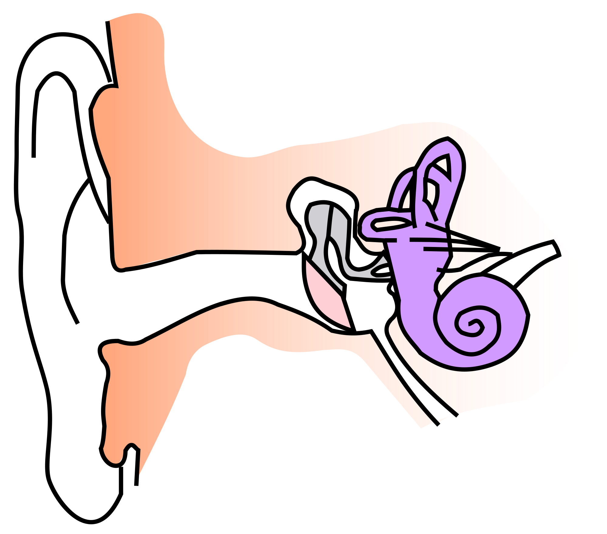 Ears clipart anatomy. File ear notext small