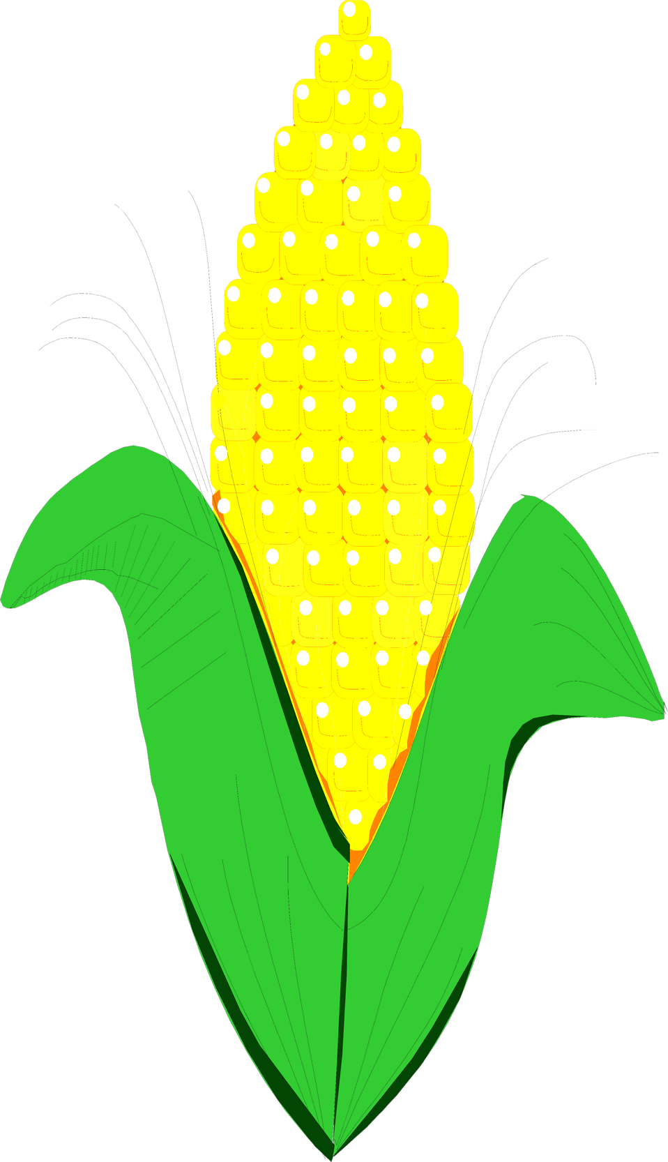 collection of ear. Clipart tree corn