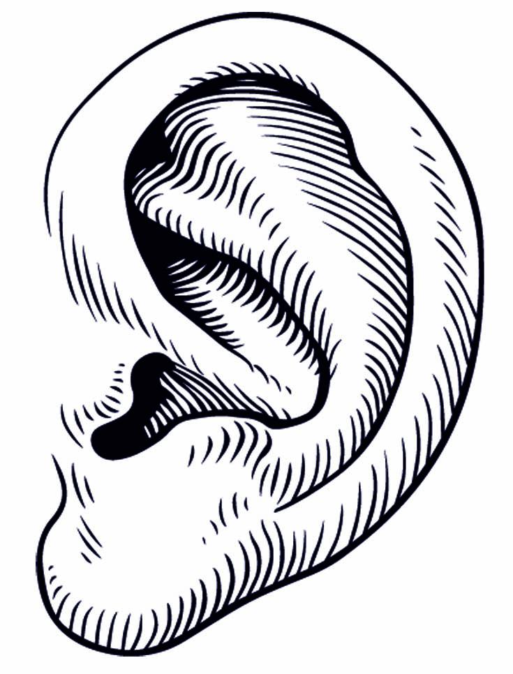 Clipart ear eye. Eyes and ears free