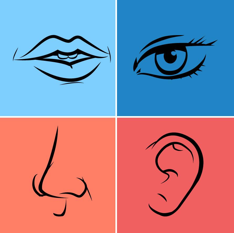 Nose mouth hurca illustrate. Clipart ear eye
