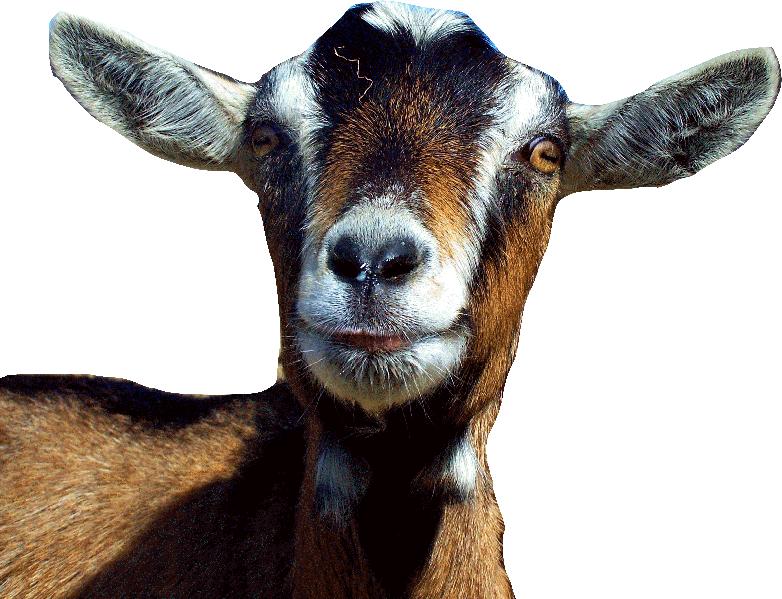 Clipart goat alpine goat. Choosing a farm animals