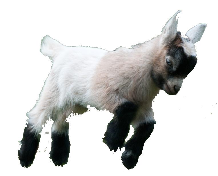 Image result for png. Goat clipart goat mask