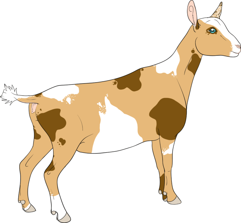 collection of nigerian. Clipart free goat