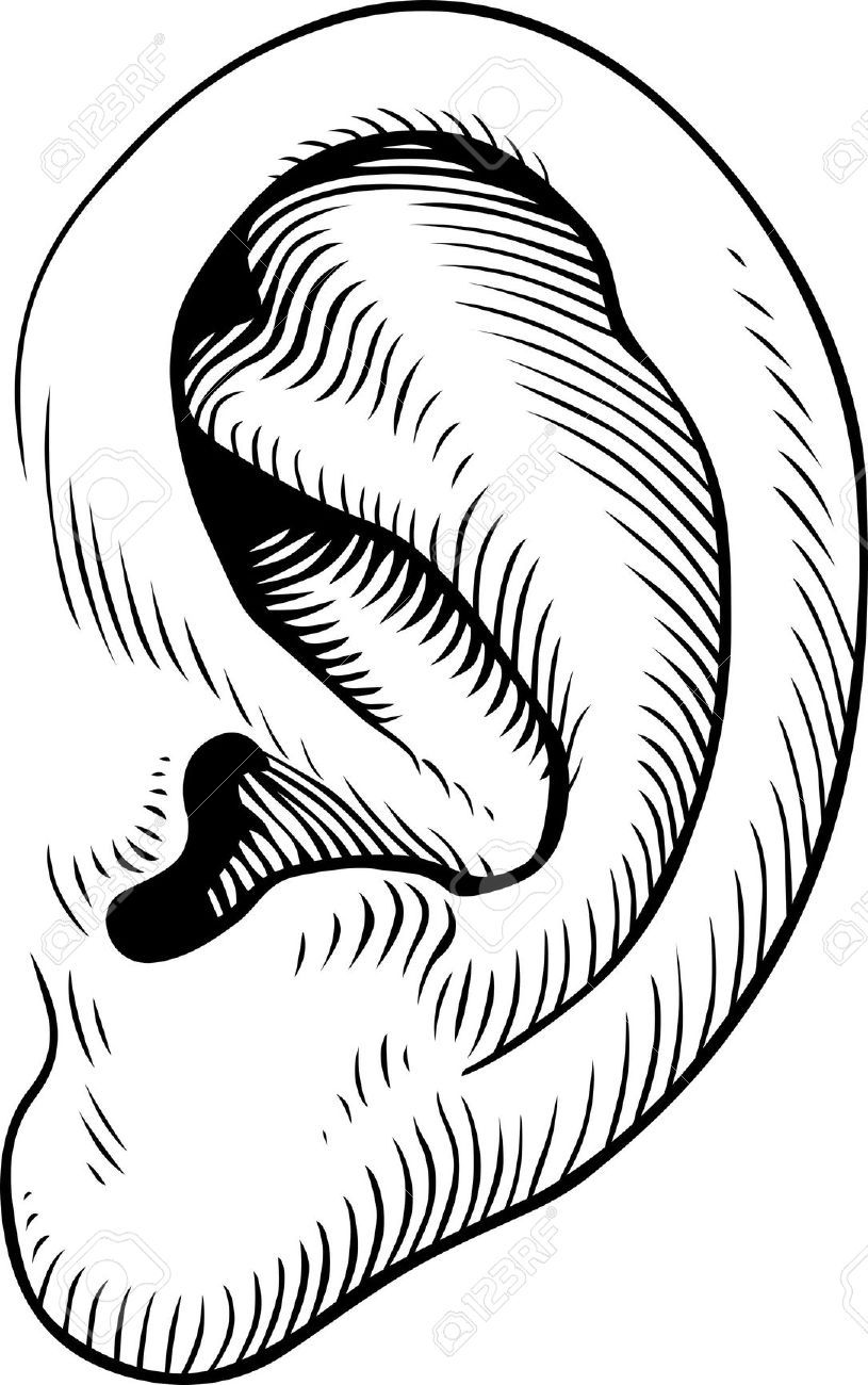 Ears clipart easy. Human black and white