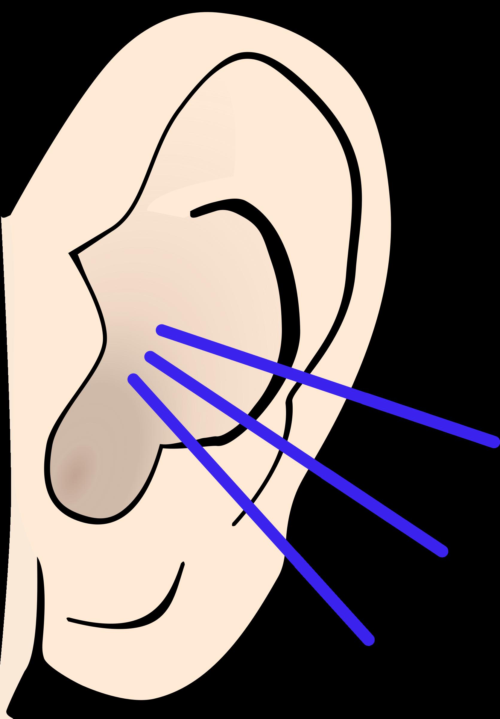 Png ears listening transparent. Nose clipart sensory organ