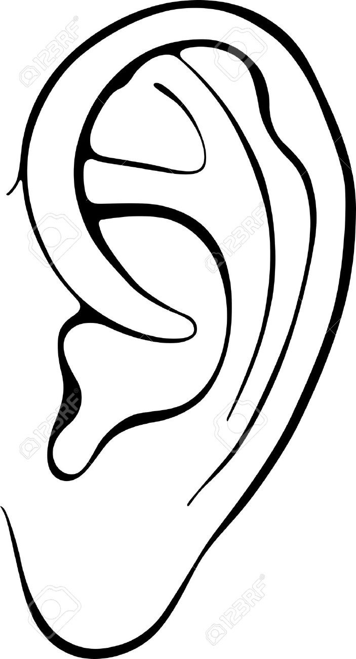 Ears clipart line. Ear drawing free download