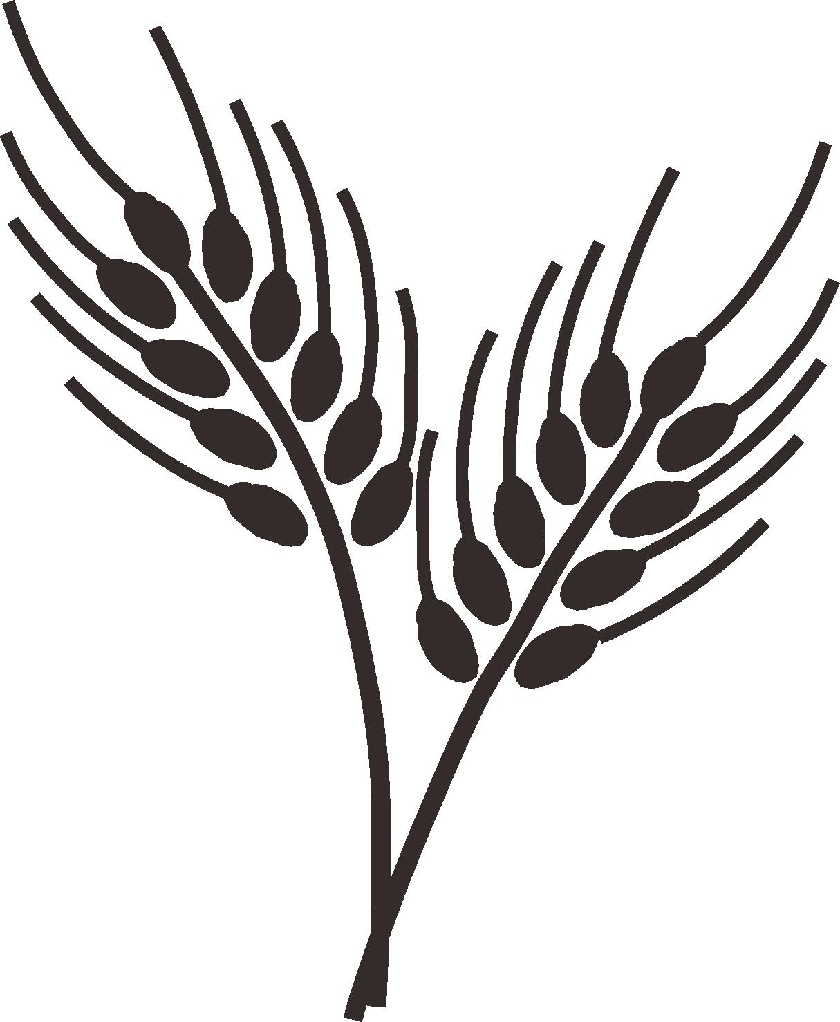Wheatgrass dibujo o do. Clipart trees paddy