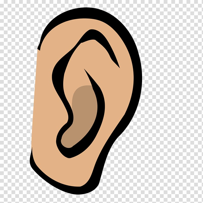 Ears clipart audiology. Ear anatomy middle outer