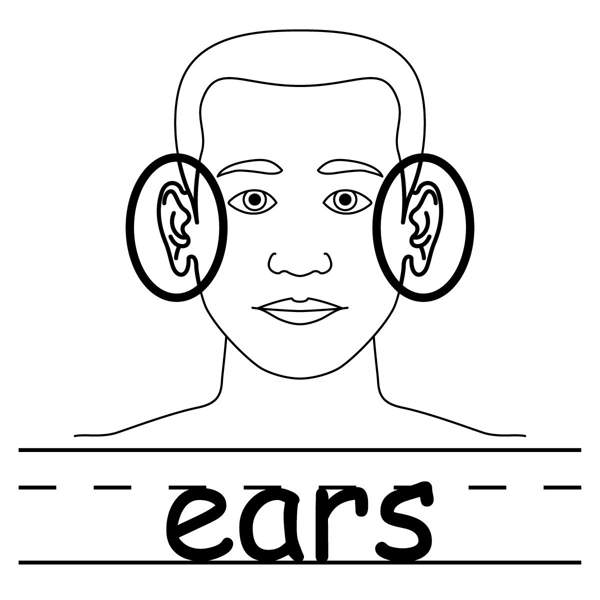 Free download clip art. Ears clipart part head
